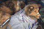 Der Hund verbrachte zwei Tage damit, sich aufzuwärmen und in der Nähe seines Freundes zu bleiben, der in Schwierigkeiten war