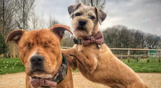 Zwei ausgesetzte Hunde haben sich nie getrennt: so musste das Tierheim gegen die Regeln vorgehen