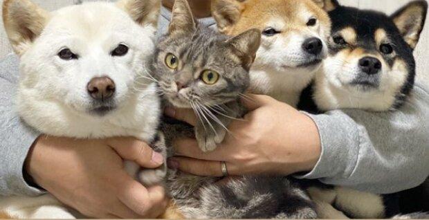 Die Hunde nahmen den Kater in ihr Rudel auf: sie  beschützen ihn vor den anderen Hunden