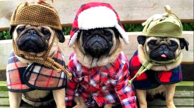 Experte verraten, ob Hunde wirklich Winterkleidung brauchen