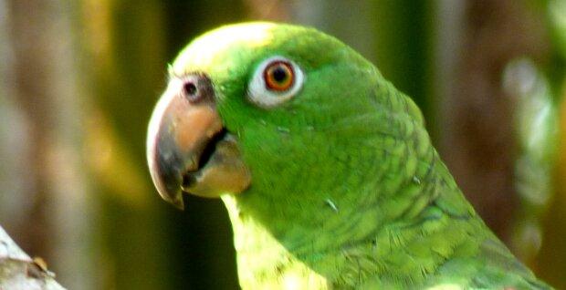 Zweite Chance: Ärzte retteten das Leben eines seltenen Papageis, indem sie seinen Schnabel durch eine Prothese ersetzten