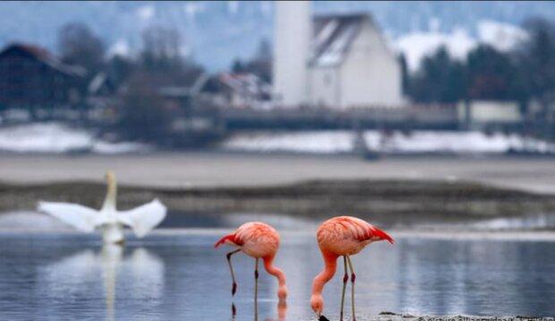 Der Forggensee in Bayern: Deutschlands größter künstlich angelegter Stausee