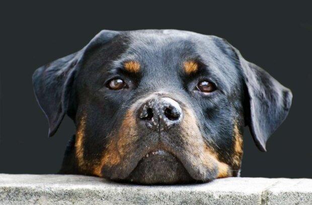 Die Hauptgefahren für die Hunde im Haus sind genannt worden: Details
