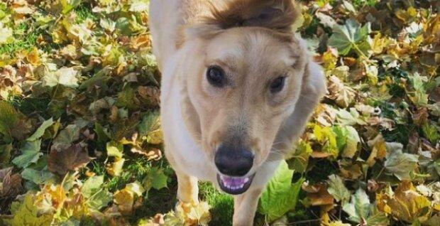Ein Welpe mit einem Ohr auf der Stirn wurde von seinem Besitzer ausgesetzt: und jetzt ist er der Star des Internets
