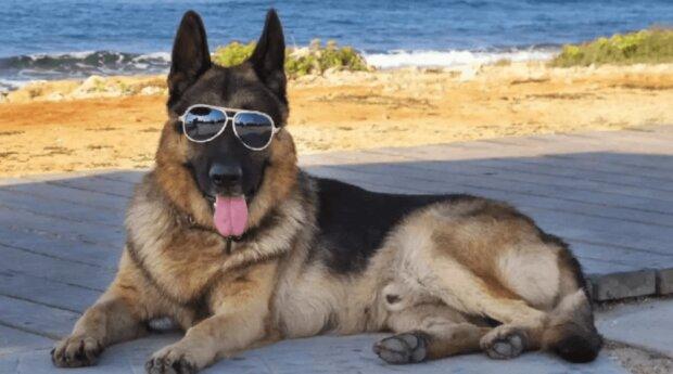 Der reichste Hund der Welt kaufte ein Haus in Miami, das früher Madonna gehörte, Details
