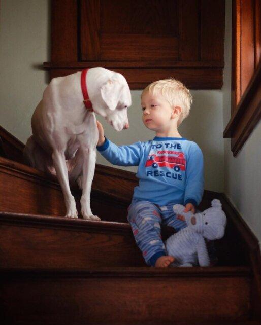 Wie sieht die Freundschaft eines kleinen Jungen mit einem Hund aus, der aufgehört hat, Menschen zu vertrauen
