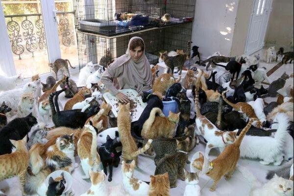 Die Frau mochte keine Tiere, aber ihr Sohn schenkte ihr eine Katze: jetzt leben 500 Katzen bei ihr