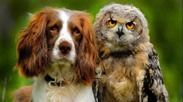 Starke und wahre Freundschaften: die Tiere mit den wärmsten Gefühlen