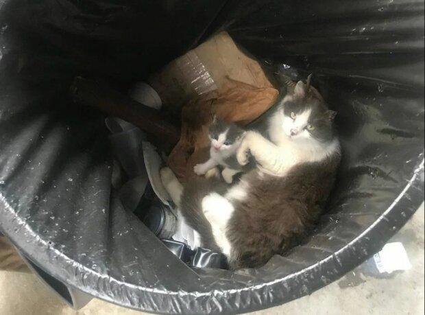 Die Katze miaute in der Mülltonne, niemand hörte es: aber endlich hatte sie Glück