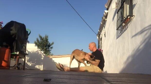 Ein Mann kehrte nach sechs Monaten Trennung zurück und beschloss, dem Hund einen Scherz zu machen
