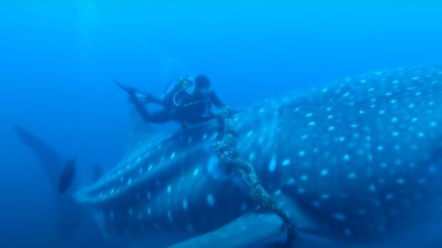 Der Driver konnte nicht herausfinden, was der Meeresriese von ihm wollte, bis das Raubtier seinen Arm ergriff