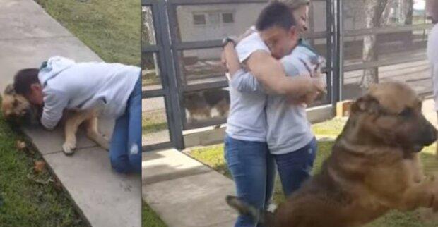 Acht Monate lang suchte der Junge nach dem vermissten Hund, und als er ihn fand, konnte er den Hund nicht mehr loslassen
