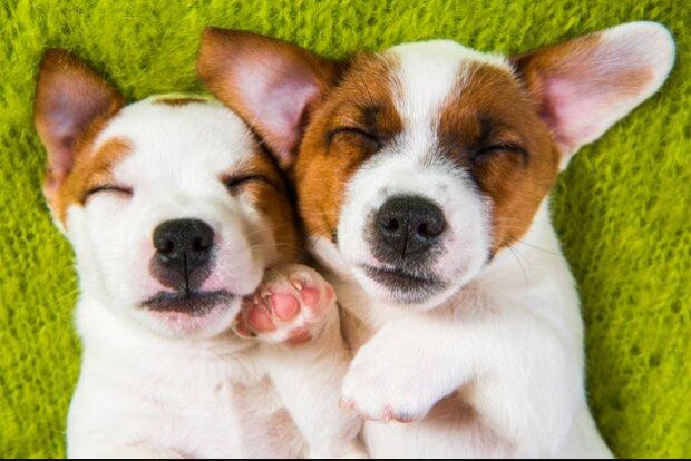 Wie ein Welpe ein wahrer Freund für einen Hund wurde, der nicht sehen kann