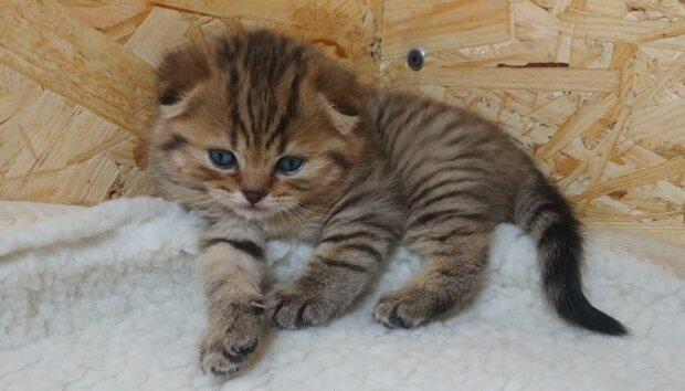 Ein winziges Kätzchen entkam auf wundersame Weise aus einer Falle und fand einen großen Freund