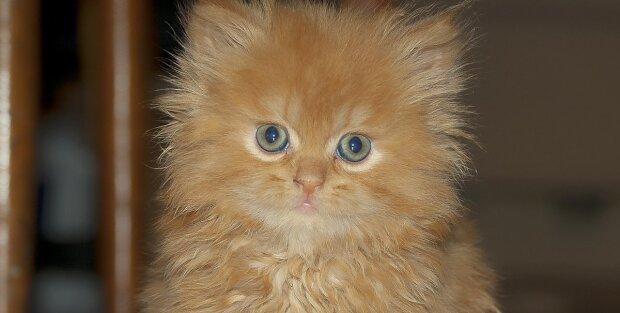 Der Kater liebte seine Katze, aber als sie Kätzchen zur Welt brachte, wurde er misstrauisch