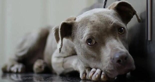 Ein Kopf ragt aus dem Beton: Retter sahen einen Hund, der in der Falle steckte