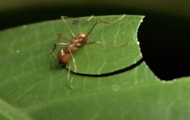 Eine Ameise. Quelle: Screenshot YouTube