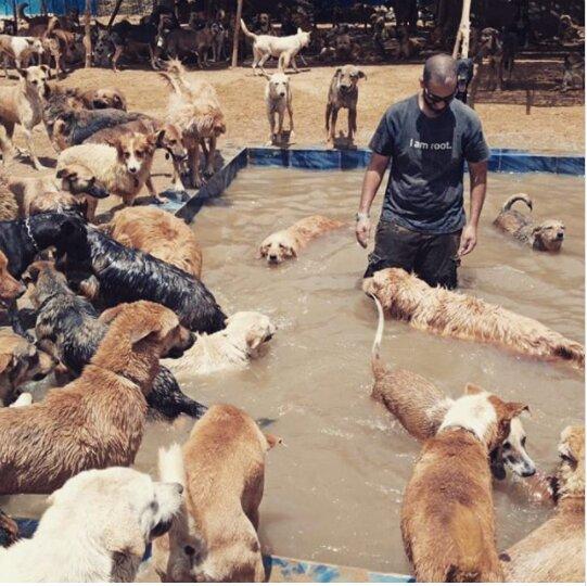 Der Mann wurde der beste Freund den Hunden des Tierheims, der nicht sehen könnte