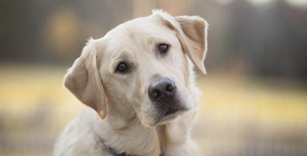 Für einen guten Zweck: Wie der Hund Tausende von Leben rettete