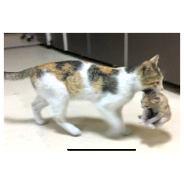 Eine Katze brachte ihr Kätzchen und die Ärzte verweigerten den Tieren nicht die Hilfe