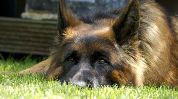 Eine Frau kam ins Tierheim und fragte nach zwei der ältesten Hunde