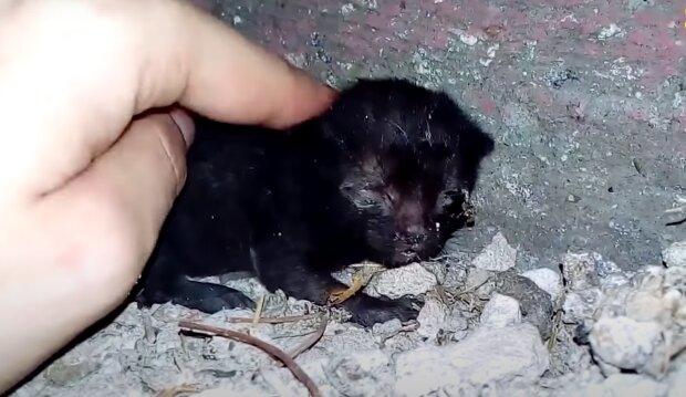 Mama Katze hat das kleine Kätzchen aufgegeben, und die Ärzte haben dem Kleinen keine Chance gegeben
