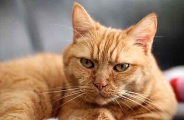 Die Katze verlor ihre Hinterbeine, aber die Tierärzte konnten ihr helfen