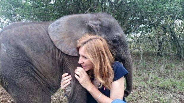 Das traurige Schicksal wartete auf den von der Herde zurückgelassenen Elefanten, aber das Schicksal entschied anders
